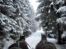 A hóval borított fák gyönyörű látványt nyújtanak